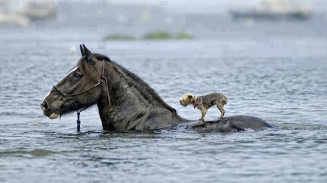 Real Life Stories of Animals Helping Each Other Out of Tight Spots ...